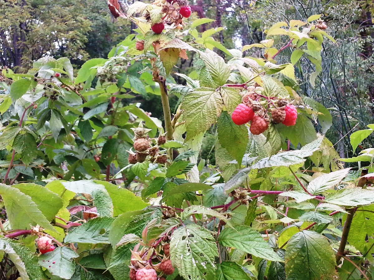 9 14 berries2